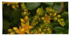 Yellow Sedum Beach Sheet