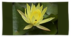 Yellow Waterlily With A Visiting Insect Beach Towel
