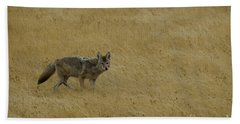 Beach Towel featuring the photograph Yellowstone Coyote by Sue Smith