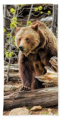 Beach Towel featuring the painting Yellowstone Grizzly Bear by Christopher Arndt