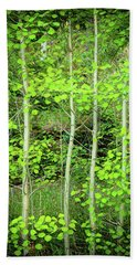 Beach Sheet featuring the photograph Young Aspen Forest Portrait by James BO Insogna