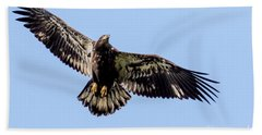 Young Bald Eagle Flight Beach Sheet by Eleanor Abramson