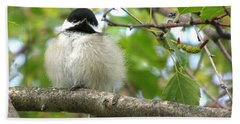 Beach Towel featuring the photograph Young Black-capped Chickadee by Angie Rea