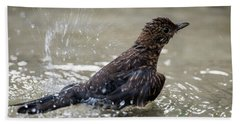 Beach Towel featuring the photograph Young Blackbird's Bath by Torbjorn Swenelius