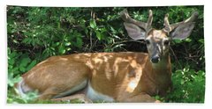 Young Buck Lying In The Shade Beach Towel by Betty Pieper
