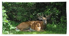 Young Buck Resting In The Shade Beach Towel by Betty Pieper