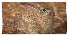 Young Cottontail In The Morning Beach Sheet