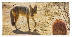 Young Coyote And Cactus Beach Towel