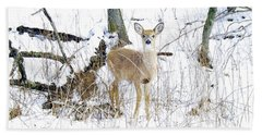 Young Doe And Spring Snow Beach Towel