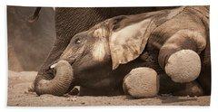 Young Elephant Lying Down Beach Towel