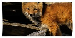 Young Fox In The Wood Beach Towel