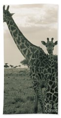 Young Giraffe With Mom In Sepia Beach Towel by Darcy Michaelchuk