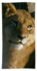 Young Lion Beach Towel