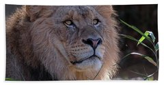 Young Lion King Beach Towel by Ronda Ryan