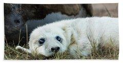 Young Pup Beach Sheet