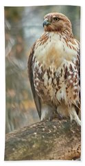 Young Red Tailed Hawk  Beach Towel