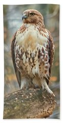 Young Red Tailed Hawk  Beach Sheet