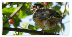 Beach Towel featuring the photograph Young Robin by Angie Rea