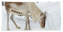 Beach Towel featuring the photograph Young Rudolf by Delphimages Photo Creations