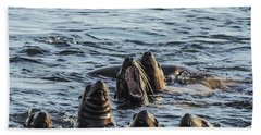 Young Sea Lions At Play Beach Towel