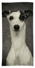 Young Whippet In Black And White Beach Towel by Greg and Chrystal Mimbs