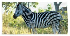 Young Zebra Beach Towel by Bruce W Krucke