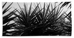 Yucca The Spanish Dagger Beach Sheet