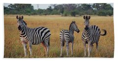 Zebra Family Beach Towel by Bruce W Krucke