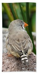 Zebra Finch Beach Towel by Valerie Ornstein