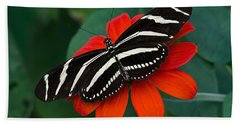 Zebra Longwing Butterfly Beach Sheet by Kenneth Albin