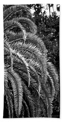 Beach Sheet featuring the photograph Zebra Palm by DigiArt Diaries by Vicky B Fuller