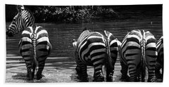 Zebras Cautiously Drinking Beach Towel by Darcy Michaelchuk