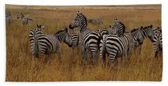 Zebras In The Grass - Panoramic Beach Towel
