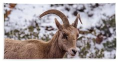 Zion Bighorn Sheep Close-up Beach Towel