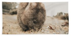 Beach Towel featuring the photograph Adorable Large Wombat During The Day Looking For Grass To Eat by Rob D Imagery
