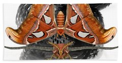 Atlas Moth7 Beach Towel