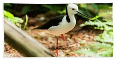 Beach Towel featuring the photograph Black-winged Stilt by Rob D Imagery