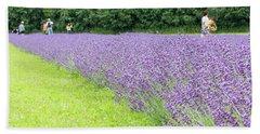 Blue Lavender Beach Sheet