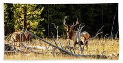 Beach Towel featuring the photograph Bull Elk  by Pete Federico