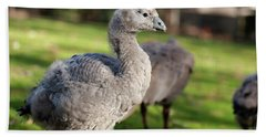 Beach Towel featuring the photograph Cape Barren Goose And Geese by Rob D Imagery