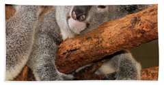 Beach Towel featuring the photograph Cute Australian Koala Resting During The Day. by Rob D Imagery