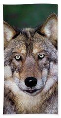 Gray Wolf Portrait Endangered Species Wildlife Rescue Beach Towel