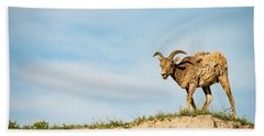 Mountain Sheep In Badlands National Park Beach Sheet