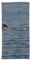Pacific Harbor Seal Beach Sheet