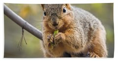 Snacking Squirrel Beach Towel