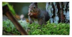 Squirrel Beach Sheet