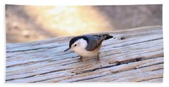 White Breasted Nuthatch Beach Towel