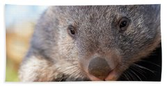 Beach Towel featuring the photograph Wombat Outside During The Day. by Rob D Imagery