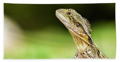 Beach Towel featuring the photograph Eastern Water Dragon Lizard by Rob D Imagery