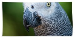 Beach Towel featuring the photograph African Grey Parrot by Rob D Imagery